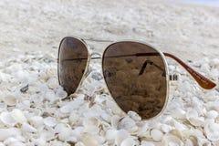 Solglasögon på Shellbeachen i Australien arkivfoto