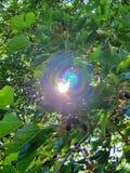 Solgnistranderegnbåge arkivbilder