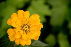 Solgräsplan blommar härliga färger Arkivfoton