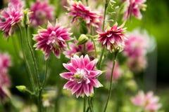 Solgräsplan blommar härliga färger Royaltyfri Fotografi