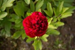 Solgräsplan blommar härliga färger Royaltyfria Foton