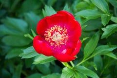 Solgräsplan blommar härliga färger Royaltyfria Bilder