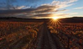 Solgrova spikar över en röd vingård i Estella Royaltyfria Foton