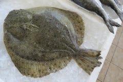 Solha da solha, peixe heterossomo, Scholle, Flunder Imagens de Stock