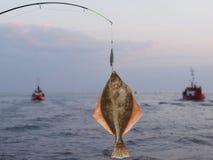 Solha grande dos peixes Fotografia de Stock Royalty Free