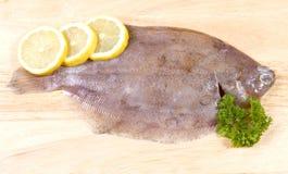 Solha-limão Foto de Stock Royalty Free
