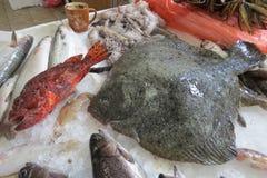 Solha, solha, peixe heterossomo, Scholle, Flunder Fotografia de Stock Royalty Free