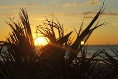Solhavet och gömma i handflatan Royaltyfri Foto