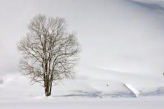 Solidão do inverno imagem de stock