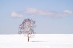 Solidão do inverno Imagens de Stock Royalty Free