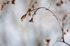 Solidão do inverno Fotografia de Stock