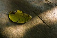 Solidão do outono Fotos de Stock Royalty Free