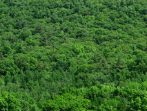 Solid green treetops background. Stock Images
