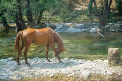 Horse running around the water royalty free stock image