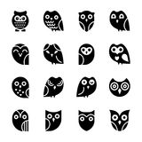 Baby Owl Glyph icons. Solid  icons set of owls has a single bird but designed adorably that each icon is different from another, The colorful, bright and cartoon Stock Images