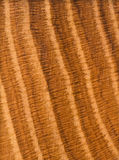 Solid Oak Hardwood Board Wood Grain Pattern Stock Photo