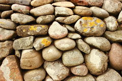 Solid  stonewall with round stones and alga Royalty Free Stock Photo