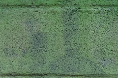 Solid structure of green grained background. Stock Photos