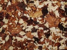 Cake walnut. Texture. Stock Image