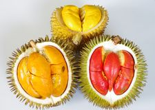 Solid Yellow Orange Red Durian. These triple coloured durians are well grown in the regions of Equatorial climate, especially in Brunei Darussalam. the trees are Stock Images