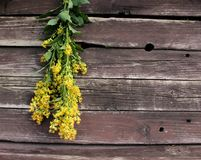 Solidago virgaurea ,European goldenrod or woundwort,is an herbaceous perennial plant of the family Asteraceae. Blurred background stock image