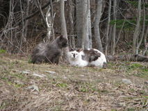 Solidary stray cats abandoned in abandoned forest. Two friendly stray cats together Stock Images