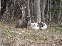 Solidary stray cats abandoned in abandoned forest. Two friendly stray cats together Royalty Free Stock Photo