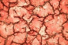 Solidified凝固了在100x显微镜视图看的血液 在显微镜礼物嗜中性和红色下的血液污迹 图库摄影