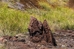 Solidified lava. On the grass in America stock image