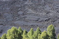 Solidified lava on La Palma, Canary Islands Stock Photography