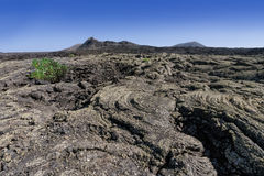 Solidified lava. Lava landscape with black, solidified lava on Lanzarote, Canary Islands, Spain stock photos