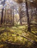 Solig äng i skogen fotografering för bildbyråer