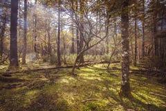 Solig äng i skogen Royaltyfria Foton