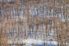 Solig backe med träd i snö arkivfoton
