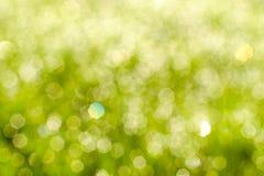 Solig bakgrund för abstrakt begreppgräsplannatur Royaltyfria Foton