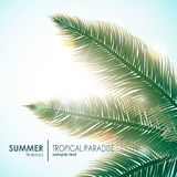 Solig bakgrund för sommarferier med palmblad Arkivfoto