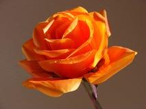 solig blomma Royaltyfria Foton