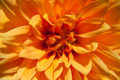 solig blomma Arkivbild