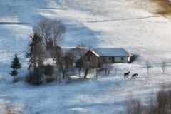 Solig dag av en vinter, på lösa transylvania kullar med Bucegi berg i bakgrund Royaltyfri Bild