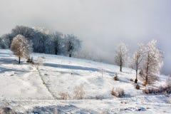 Solig dag av en vinter, på lösa Transylvania kullar romania Arkivbild