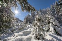 Solig dag efter nytt snöfall i skogen Royaltyfria Bilder