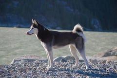 Solig dag för ung gullig skrovlig hundstrandnatur Royaltyfri Foto