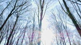 Solig dag för vårskog stock video