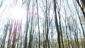 Solig dag för vårskog arkivfilmer
