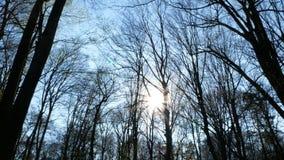 Solig dag för vårskog lager videofilmer