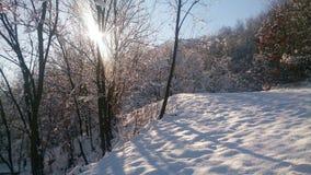 Solig dag för vinter och den djupfrysta naturen Royaltyfria Foton
