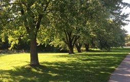 Solig dag gräsplansidor, saftigt gräs Trädställningsrad Arkivbild