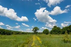 Solig dag, grönt gräs och blå himmel med moln Royaltyfri Foto
