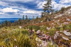 Solig dag i de Ural bergen Fotografering för Bildbyråer