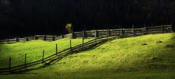 Solig dag i det gröna fältet Royaltyfri Fotografi